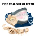 Science Kit - Shark Tooth Dig